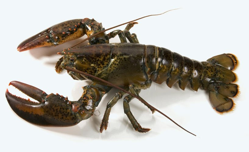 slide-lobster.jpg